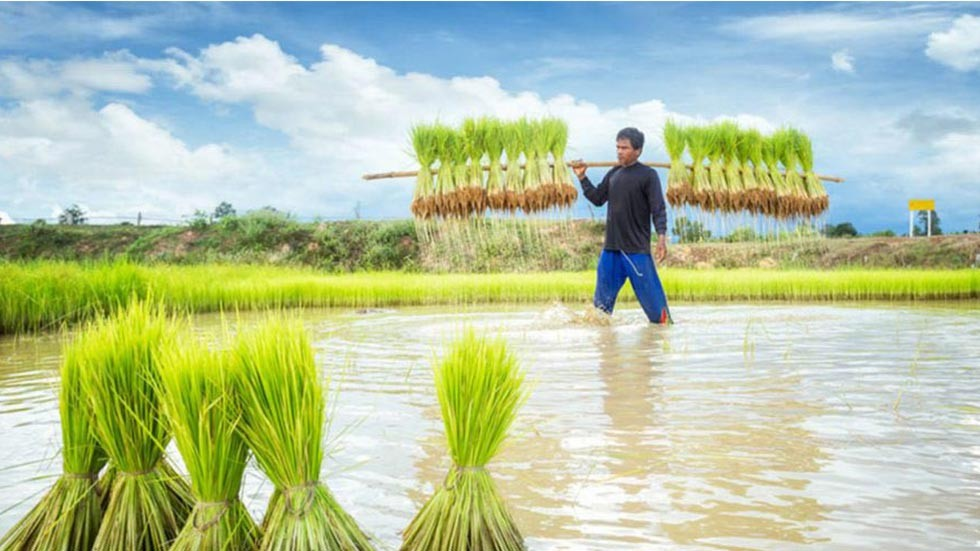 Oxfam to Empower Cambodian Rice Farmers With Blockchain